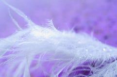 Feather on background. Macro Stock Photo