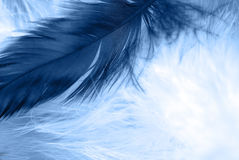 Feather on   background. Macro Royalty Free Stock Photos
