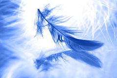Feather on background. Macro. Close-up of feather on background. Macro stock images