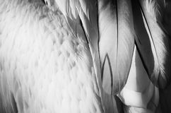 Feather Background Royalty Free Stock Images