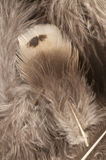 Feather background with a soft texture Royalty Free Stock Photos
