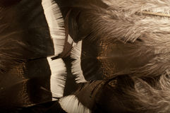 Feather background with a soft texture. Royalty Free Stock Photos