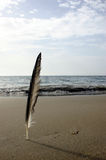 Feather Beach. Feather standing up on the beach royalty free stock images