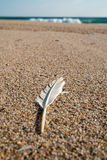 Feather on Beach Royalty Free Stock Photos