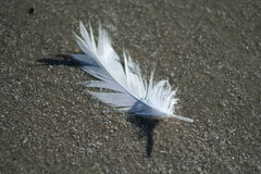 Feather on Beach Royalty Free Stock Photography