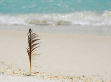 Feather at the Beach Stock Image
