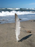 Feather on the beach (clean). A feather standing infront of the ocean Stock Photography