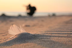 Feather Beach coast sand Baltic sea Royalty Free Stock Image