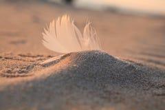 feather Beach coast sand Baltic sea Stock Photography