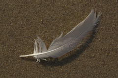 Feather on the beach Royalty Free Stock Photography