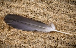 Feather on a Beach Great Lakes stock image