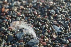 Feather on the beach. You see feather seagull on the beach with pebbles Stock Image
