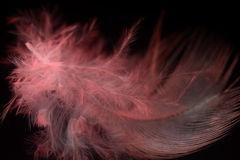Feather. Beautiful red feather on a black background. close-up Royalty Free Stock Images