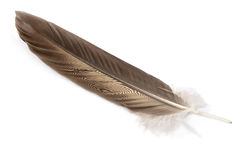 Feather. The big beautiful feather isolated on white background Stock Images
