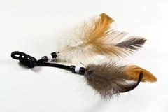 Feather of the bird Stock Photos