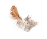 Feather of a bird Royalty Free Stock Photography