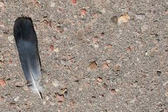 Feather of a bird on the asphalt royalty free stock photography
