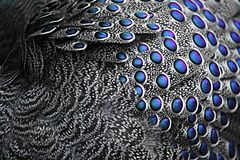 Feather, Bird, Bird Feather, Nature Royalty Free Stock Photo