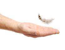 Feather bird falling to hand Royalty Free Stock Photography