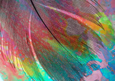 Feather of a bird from paradise garden. Macro color image Stock Image