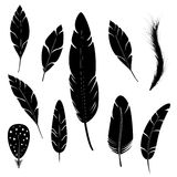 Feather of bird Royalty Free Stock Photos