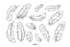 Feather bird vector hand drawn designer elements set collection. royalty free illustration