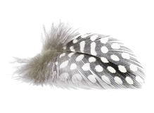 Feather. Bird feather on white background, isolated Royalty Free Stock Images