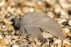 Feather birds. On the background of small sea shells Stock Image