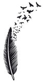 Feather, birds Stock Photography