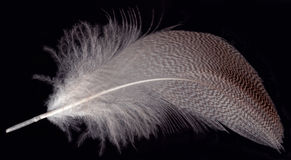 Feather on black Royalty Free Stock Photography