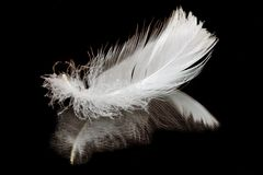 Feather on black Royalty Free Stock Photo