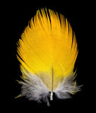 Feather on black background Stock Images