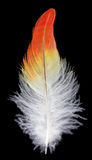 Feather on black background Royalty Free Stock Photos
