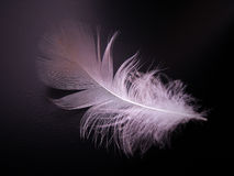 Feather on black background. White feather on black background Royalty Free Stock Image