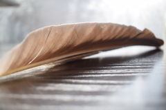 Feather of black herons on the wooden pad royalty free stock photo