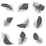 Feather Black Set Stock Photo