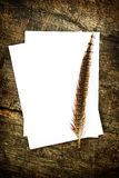 Feather and blank paper Stock Image