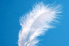 Feather on blue Royalty Free Stock Images