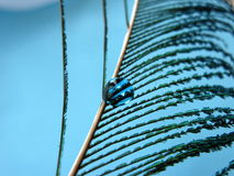 Feather with a blue drop. Feather with a bright blue water drop stock image