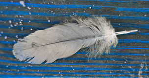 Feather in blue. Feather resting on blue board Stock Photos