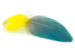 Feather. Blue and yellow feather isolated on white Royalty Free Stock Images