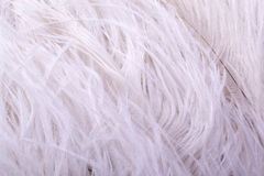 Feather boa Stock Photos