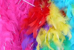 Feather Boas. Colorful collection of feather boas Stock Photography