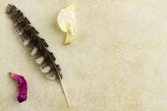 Feather and book Royalty Free Stock Photography
