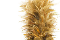 Feather broom Royalty Free Stock Image