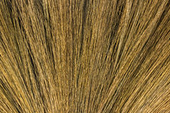Feather broom grass Royalty Free Stock Image