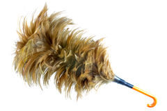 Feather broom Stock Image
