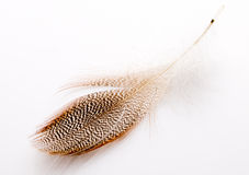Feather. Stock Photos