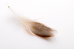 Feather. Royalty Free Stock Image