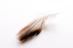 Feather. Stock Photo